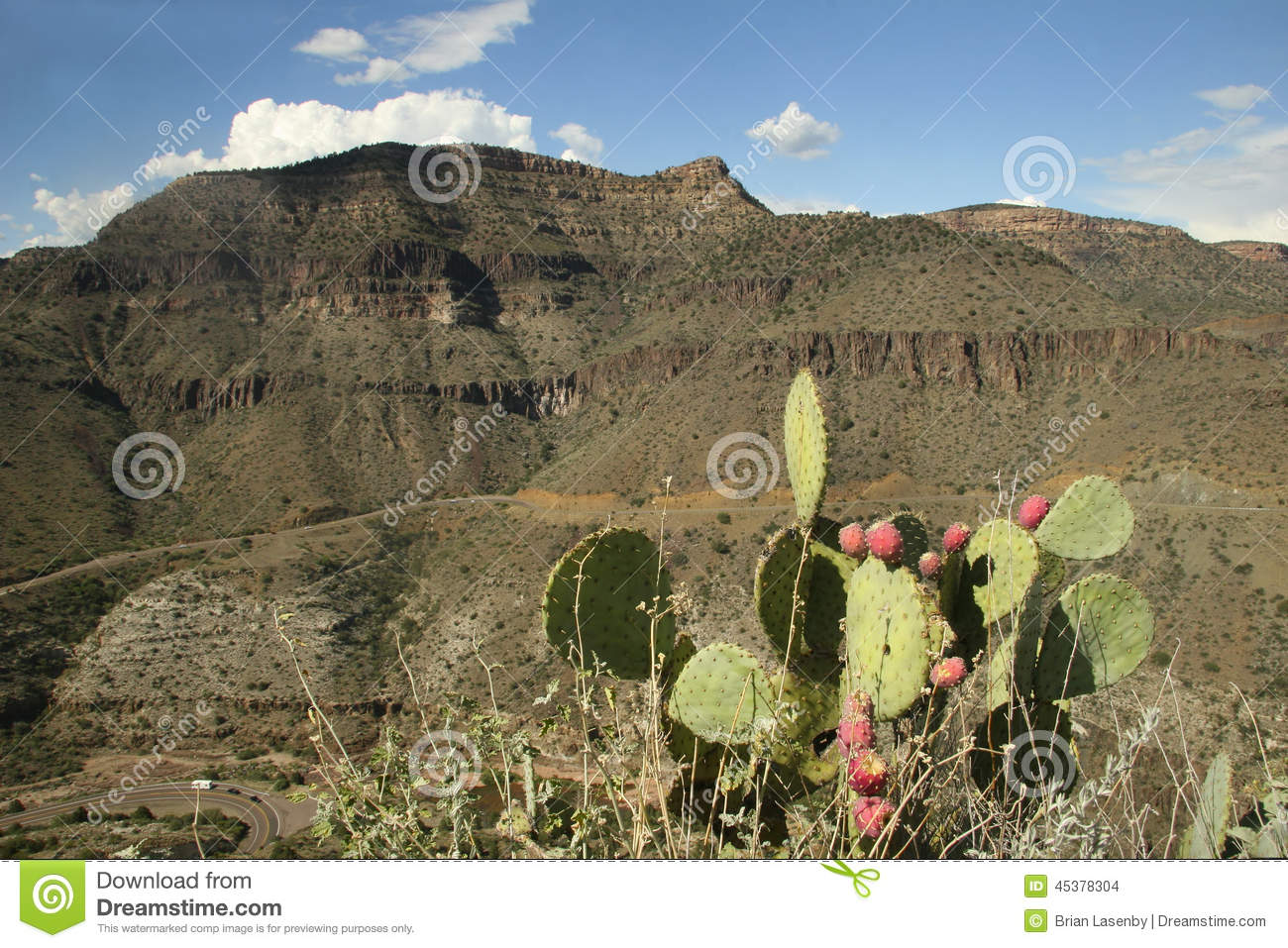 Prickly Pear Cactus And Sandstone Mountain.