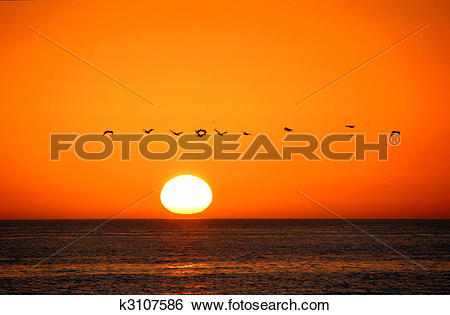 Stock Images of Birds In Flight Sunrise Sanibel Island Florida.