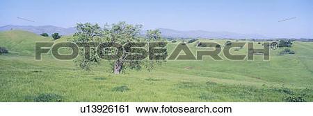 Stock Photography of Spring Field, Santa Ynez Valley, California.