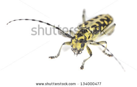 Insects Isolated Stock Photos, Royalty.