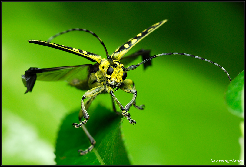 Unusual insects.
