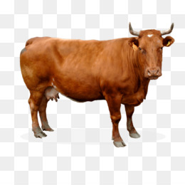 Sahiwal Cattle PNG and Sahiwal Cattle Transparent Clipart.