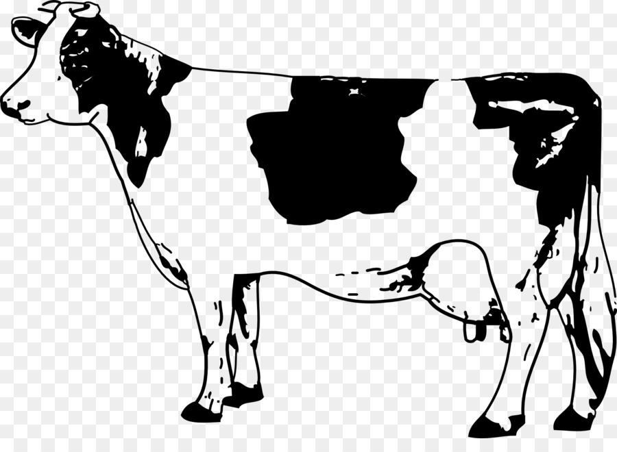Charolais cattle Calf La Rural.