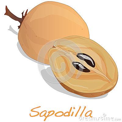 Sapodilla Fruit Stock Illustrations.