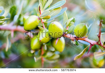 Argan Stock Images, Royalty.