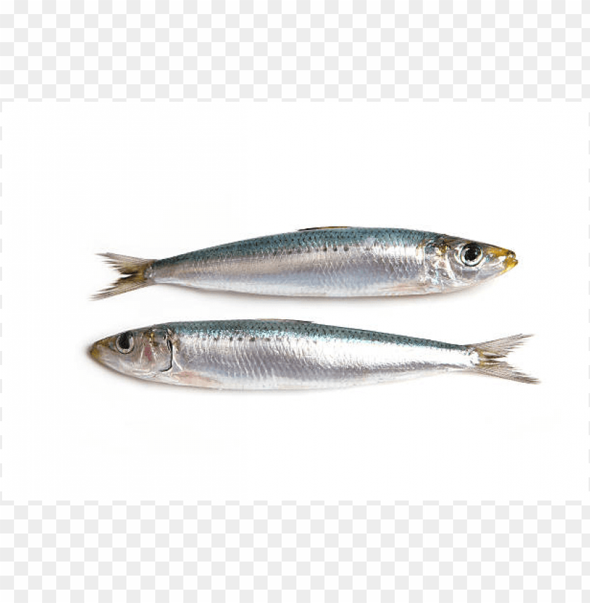 Download Sardine png, Sardine Fish PNG , Download Sardine.