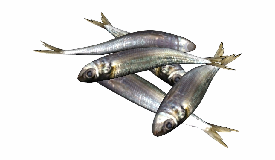Png Sardine Fish Free PNG Images & Clipart Download #1815548.