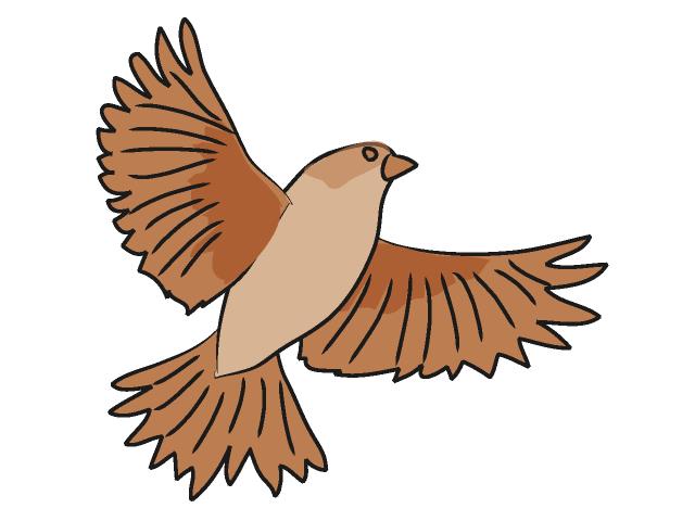Sparrow 20clipart.