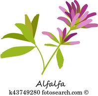 Sativa Clipart Royalty Free. 372 sativa clip art vector EPS.