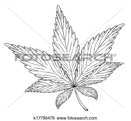 Clip Art of Leaf of the plant Cannabis sativa k17795479.