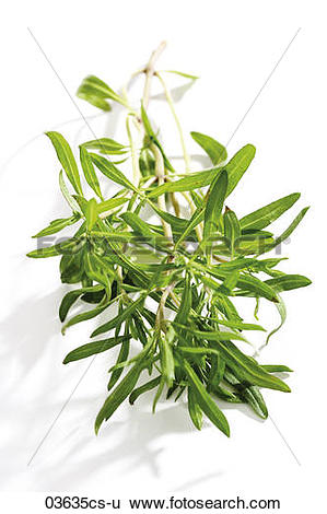 Stock Images of Savory (Satureja hortensis), close.