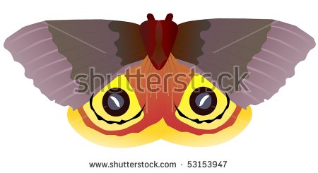Saturniidae Stock Vectors & Vector Clip Art.