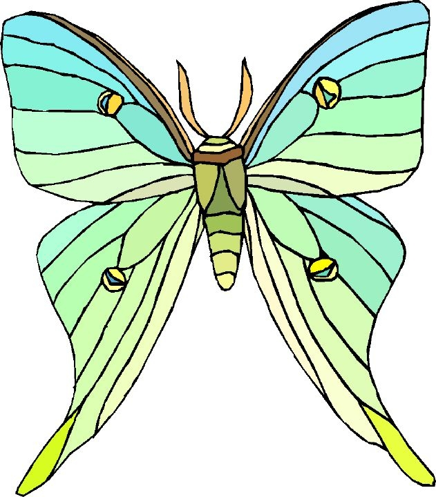 ANIMAL Teachers: Crawling Ones: Saturniidae: Royal Moths and Giant.