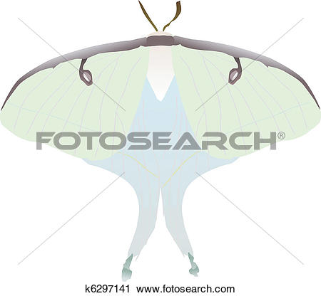 Clipart of butterfly Saturniidae k6297141.