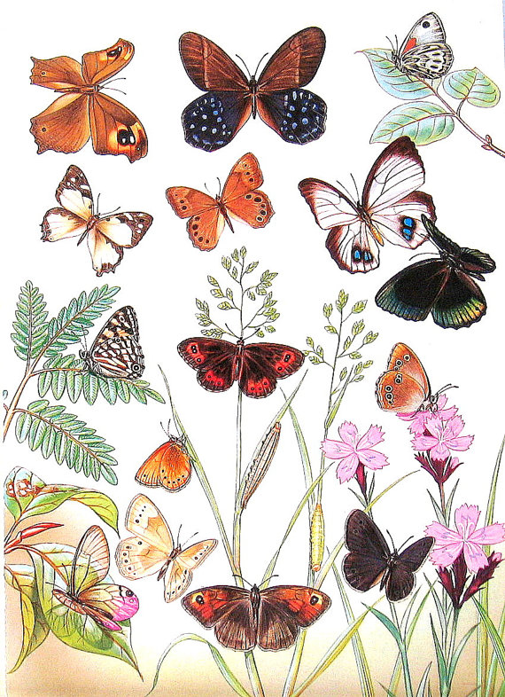 Butterflies 1985 Butterfly Book Plate by mysunshinevintage.