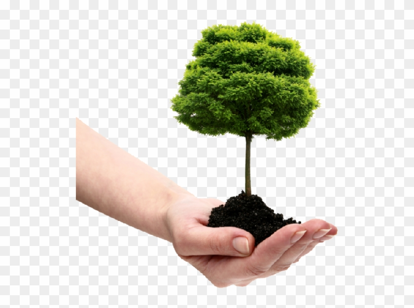 Save Tree Png File.