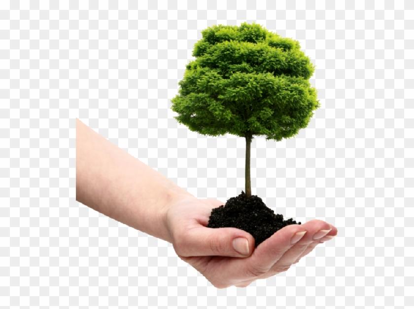 Save Tree Png File.