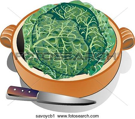 Clipart of Savoy Cabbage.