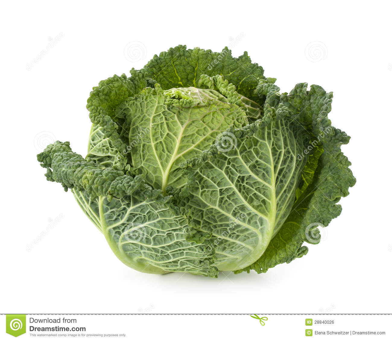 Savoy Cabbage Stock Photos, Images, & Pictures.