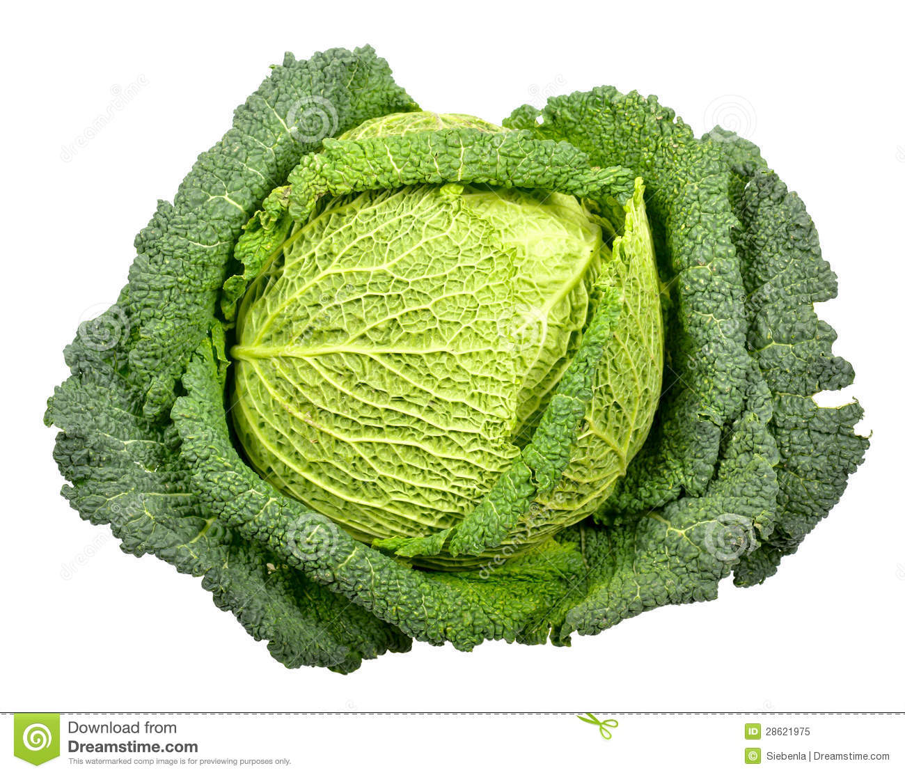 Savoy Cabbage Royalty Free Stock Photo.