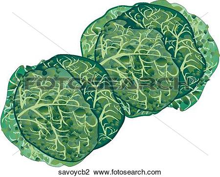 Clip Art of Savoy Cabbage savoycb2.
