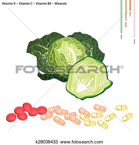 Clipart of Savoy Cabbage with Vitamin K, C and B9 k28038433.