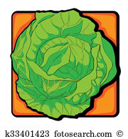 Savoy cabbage Illustrations and Clipart. 15 savoy cabbage royalty.