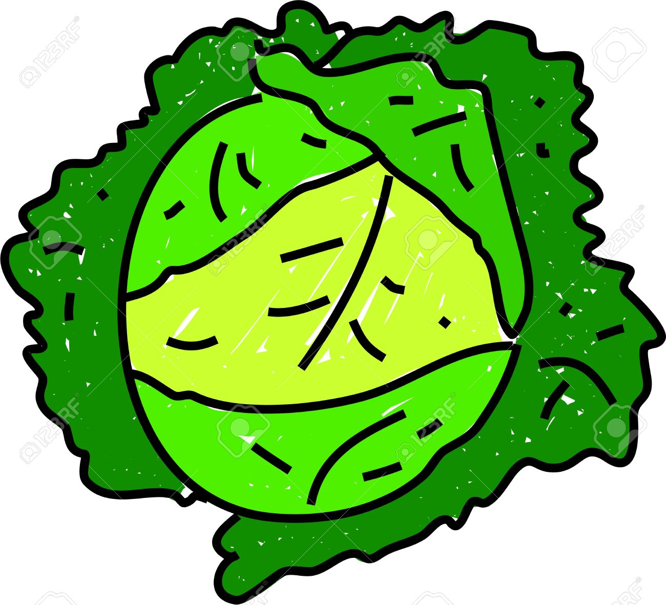Savoy Green Leafy Cabbage Isolated On White Drawn In Toddler.