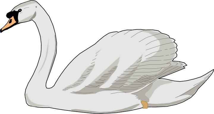 Swan Clip Art & Swan Clip Art Clip Art Images.