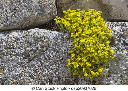 Stock Photo of yellow flowers on a stone wall.
