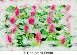 Saxifragaceae Illustrations and Stock Art. 3 Saxifragaceae.