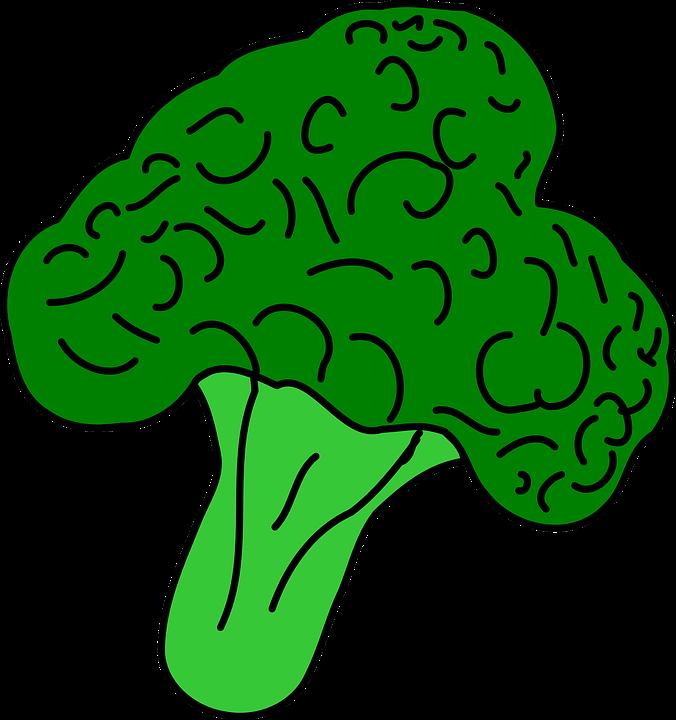 Free vector graphic: Broccoli, Vegetable, Healthy Food.
