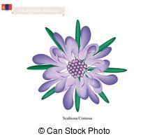 Scabiosa Vector Clip Art EPS Images. 9 Scabiosa clipart vector.
