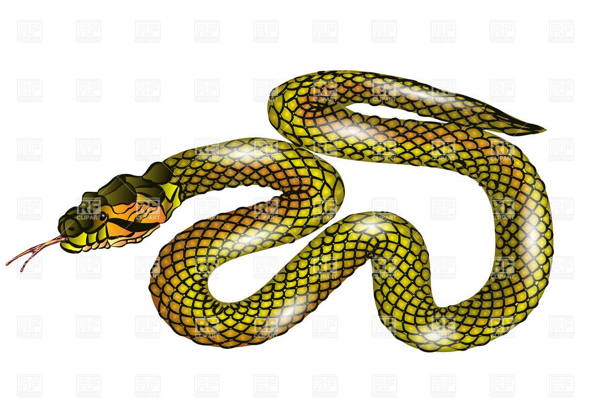 Snake isolated on white background Vector Image #27499.