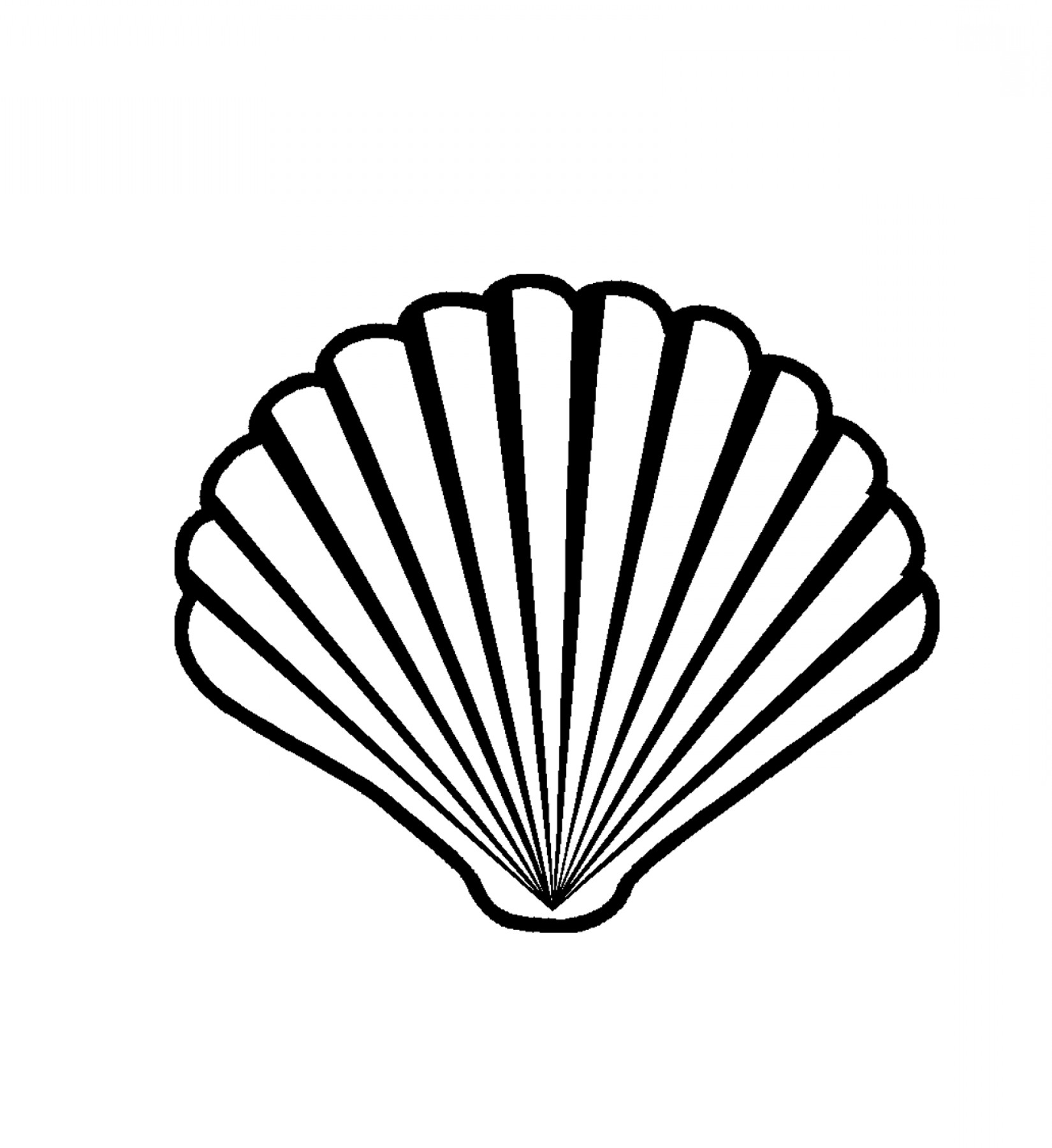 Collection of Scallop clipart.
