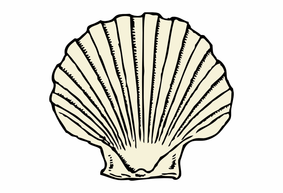 Scallop Shell Clip Art Free Vector.