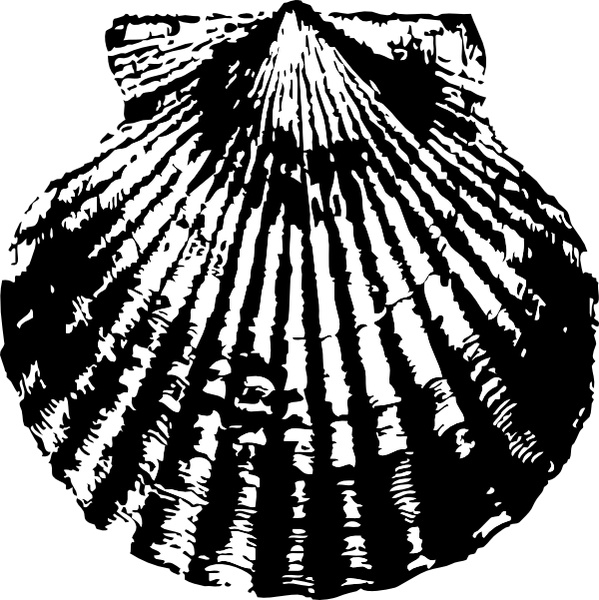 Scallop Shell clip art Free vector in Open office drawing.
