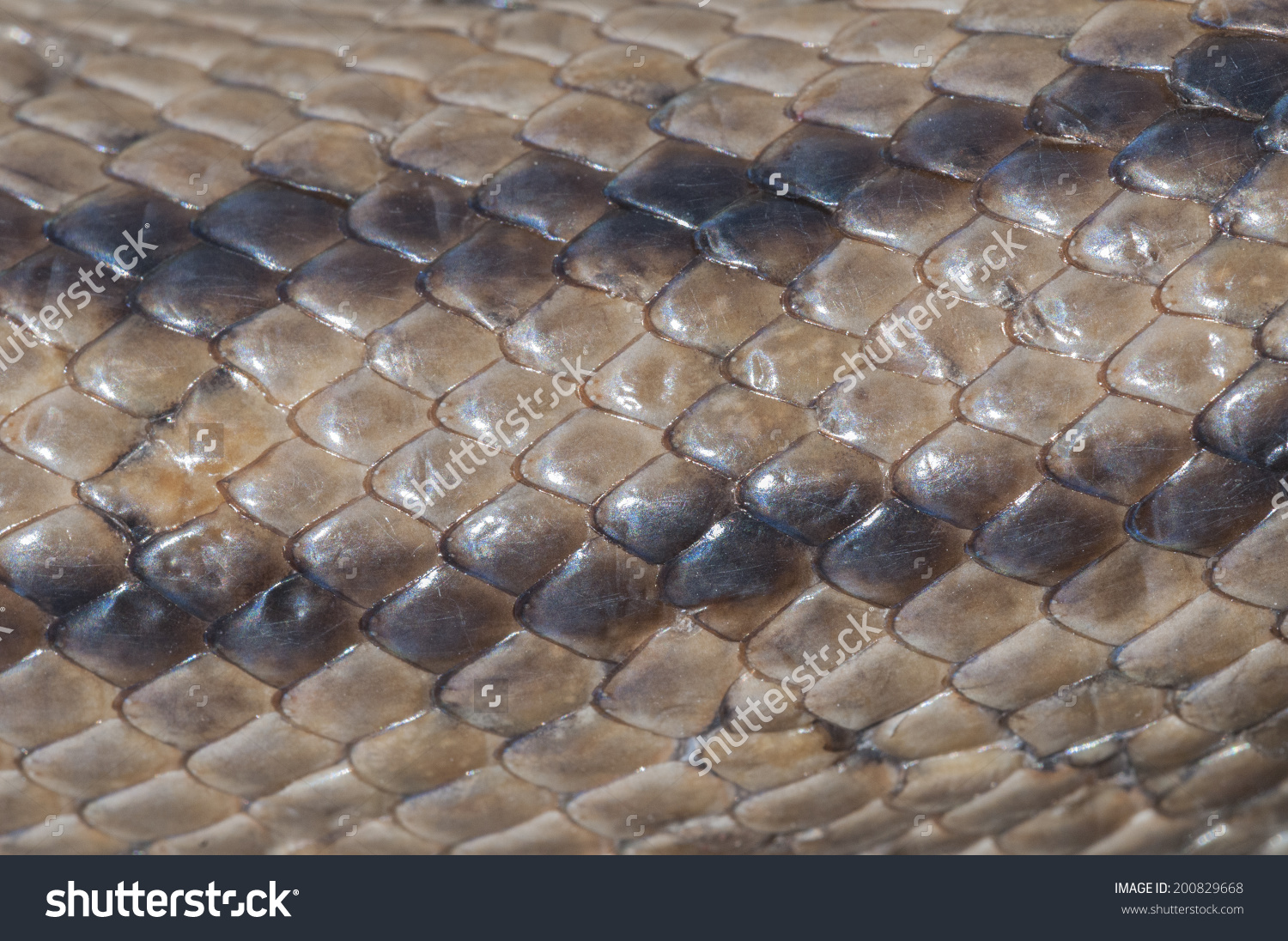 Scaly Skin Texture Snake Ladder Stock Photo 200829668.
