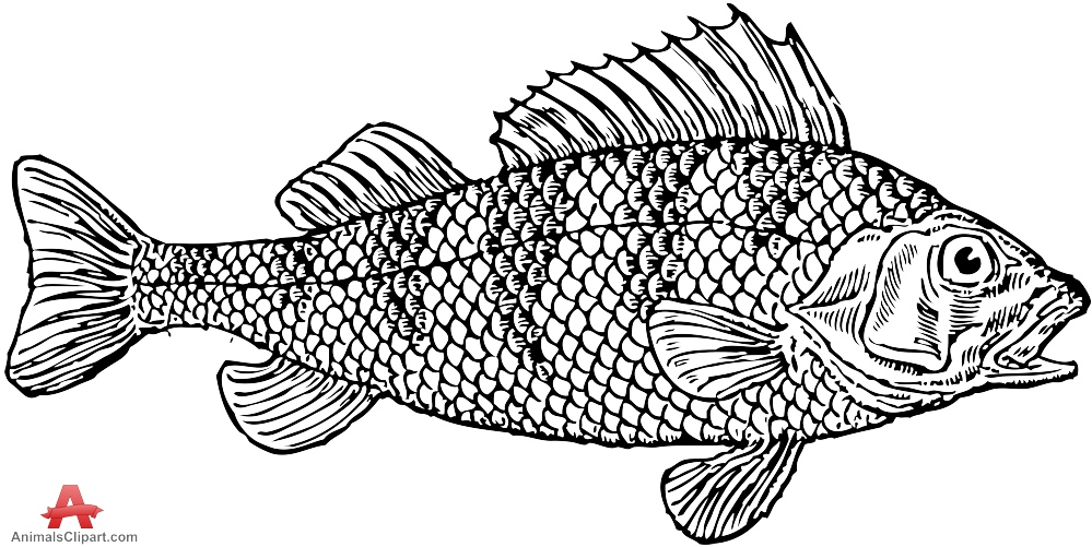 Scaly Fish Clipart Drawing.