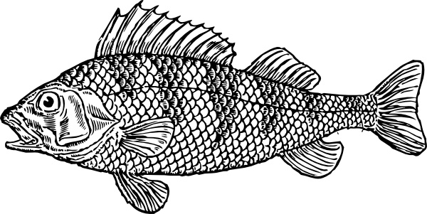 Scaly Fish clip art Free vector in Open office drawing svg ( .svg.