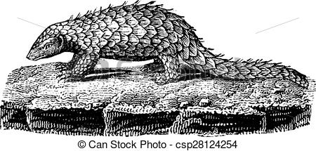 Clipart Vector of Pangolin or scaly anteater, vintage engraving.