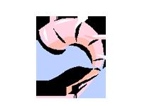 Shrimp clip art download.