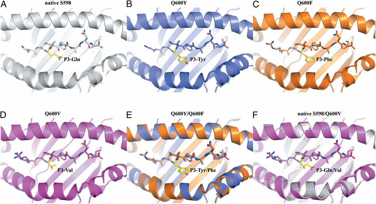 Structural and Functional Correlates of Enhanced Antiviral.