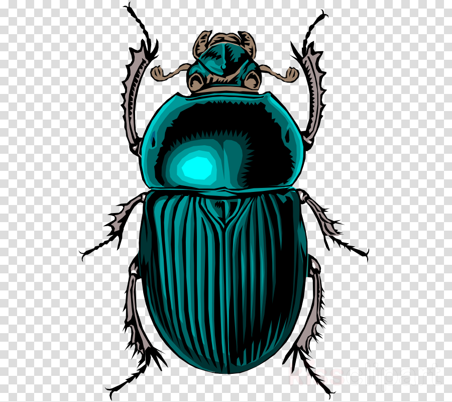 scarab beetle drawing clipart Dung beetle Scarab clipart.