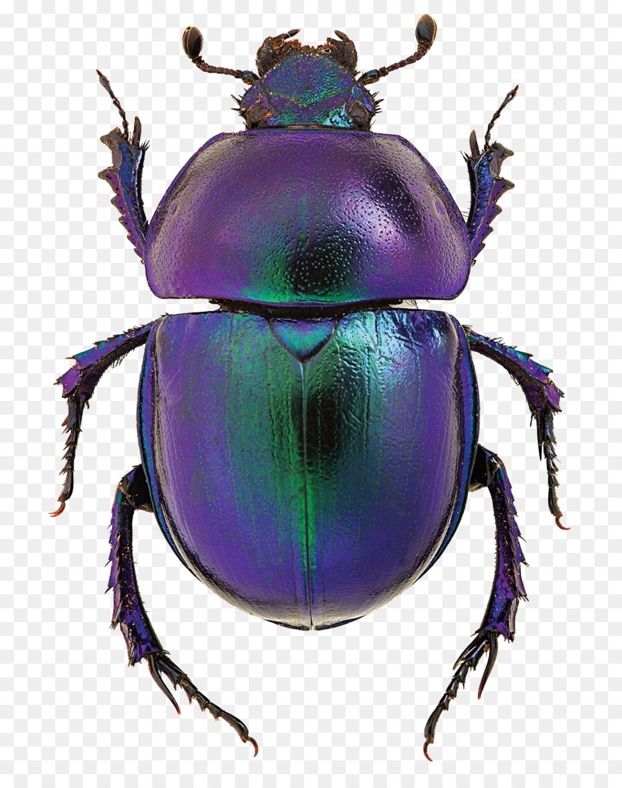 Dung Beetle Clipart transparent.