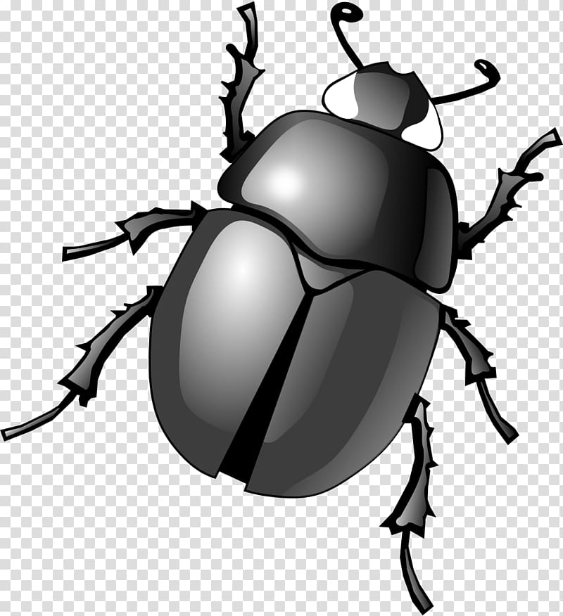 Dung beetle , beetle transparent background PNG clipart.