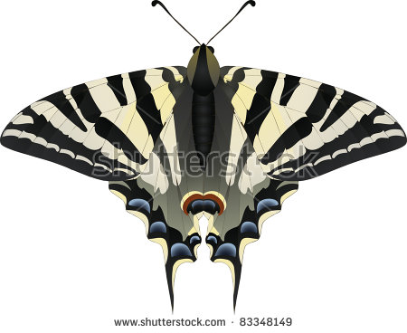 Scarce Swallowtail Stock Vectors & Vector Clip Art.