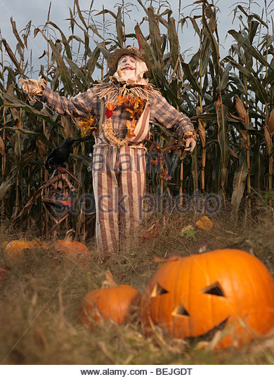 Scary Corn Field Stock Photos & Scary Corn Field Stock Images.