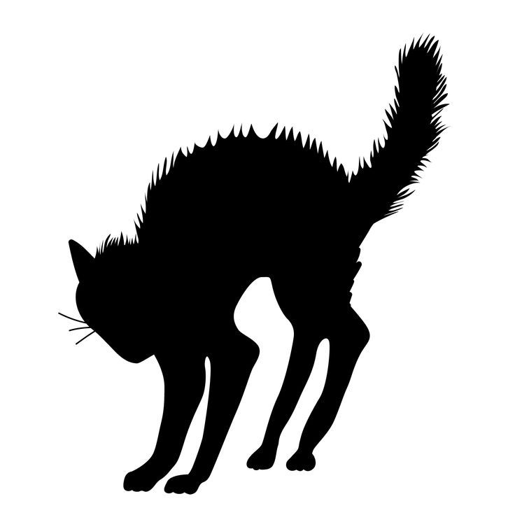 Scary Halloween Black Cat Silhouette.