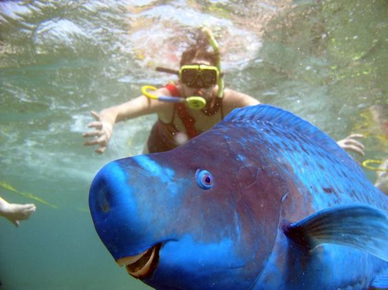 """Fish #Photobombs, """"Does this color make me look fat?""""."""